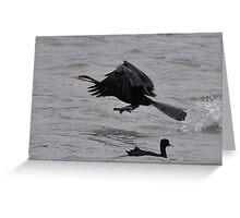Darter take-off at Lake Elphinstone Greeting Card