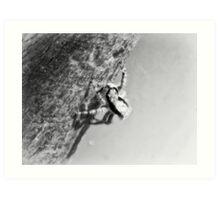 ©NS A Spider Life VIIA Monochrome Art Print