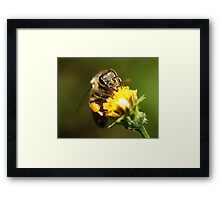 In your face ! Framed Print