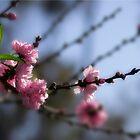 Welcome spring! by Celeste Mookherjee