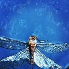 Dragonfly  by Ritkey