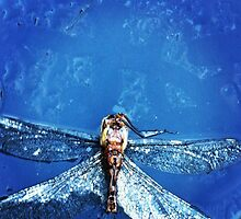 Dragonfly  by Ritkey