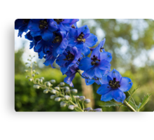 Sapphire Blues and Pale Greens - a Showy Delphinium Canvas Print