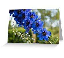 Sapphire Blues and Pale Greens - a Showy Delphinium Greeting Card