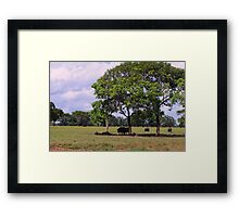 Water Buffalo - Shade from the Hot Tropical Sun Framed Print
