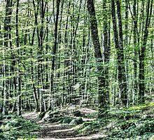 Light Between Trees by Marc Garrido Clotet
