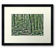 Light Between Trees Framed Print