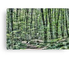 Light Between Trees Canvas Print