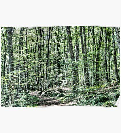 Light Between Trees Poster