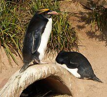""" a penguins life "" by lisamaffialove"