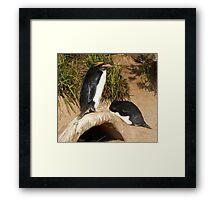 """"""" a penguins life """" Framed Print"""
