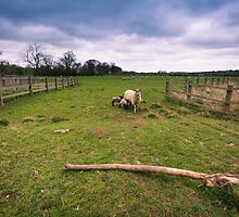 Sheep under a stormy sky by Ralph Goldsmith