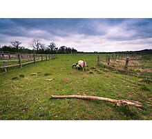 Sheep under a stormy sky Photographic Print