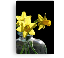 A Jonquil Morning Canvas Print