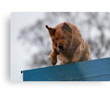 Dog Agility No. 1  (name of Karv A, Latin for beware) Metal Print