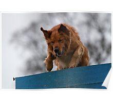 Dog Agility No. 1  (name of Karv A, Latin for beware) Poster