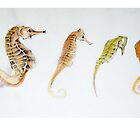 Four Seahorses by BonniePortraits