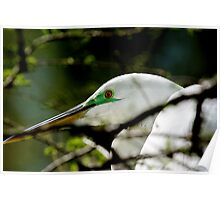 Egret Upclose in Tree Poster