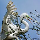 Egret Makes Safe Nest Landing by imagetj