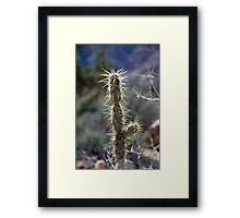 Cactus and the Sun Framed Print