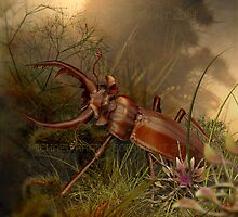 Brown Stag Beetle by MichaelFrank