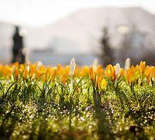 Spring is here! Bergen, Norway. by Paulius Bruzdeilynas