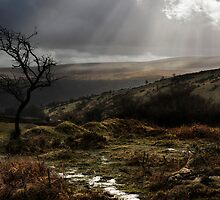 DARTMOOR by Michael Carter