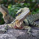 Water Dragon, Complete With Spider by stevealder