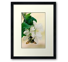 Apple and Bumble Framed Print