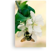 Apple and Bumble Canvas Print