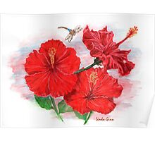 Hibiscus with Dragonfly Poster