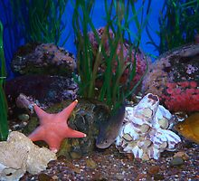 Colorful Star Fish by photopen4