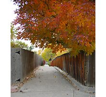 Down the Tree Lined Lane Photographic Print