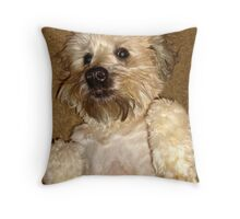 Soft Coated Wheaton Terrier Throw Pillow