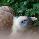 Nesher, the Beautiful Vulture by starbucksgirl26