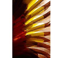 Sun Wing Photographic Print