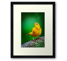 Yellow Finch... Framed Print