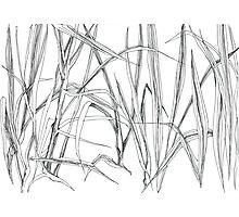 GRASS Photographic Print