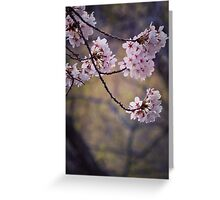 Cherry blossoms in pink and green Greeting Card