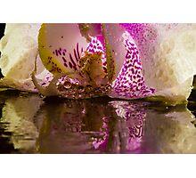Rainy Orchid Photographic Print