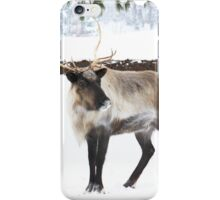 Reindeer for Christmas. iPhone Case/Skin