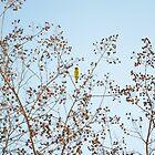 Little Yellow Bird by RichCaspian