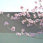 Spring Boulevard by RichCaspian