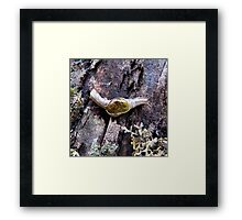 Rainforest No.1 Framed Print