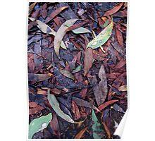 Rainforest No.3 Poster