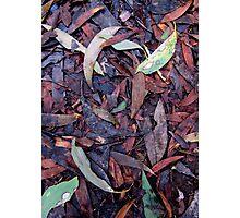 Rainforest No.3 Photographic Print