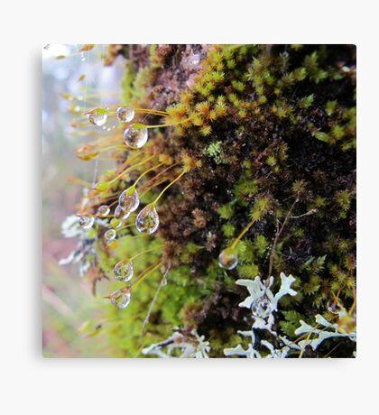 Rainforest No.4 Canvas Print