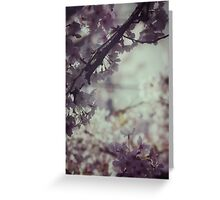 Delicate cherry blossoms Greeting Card