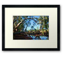 Fallen Paperbark Tree in Swampy Bushland - Northern Teritory Australia Framed Print
