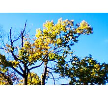 Sparse Green Yellow Photographic Print